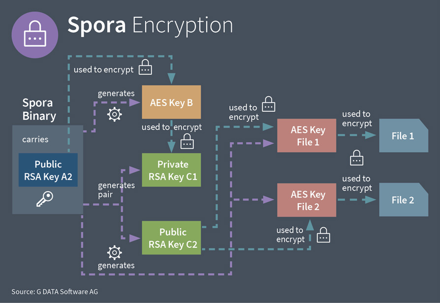 G DATA info graphic of encryption steps Spora takes